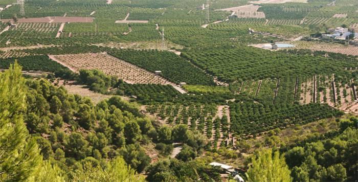 campos de naranjas