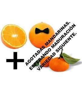 Gemischte Karton mit 10 Kilo gemischten Orangensaft und fünf Kilo Mandarinen.